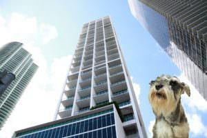 Arlington VA Condo Pet Policies