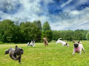 Glencarlyn Dog-Park is a Pet's Paradise